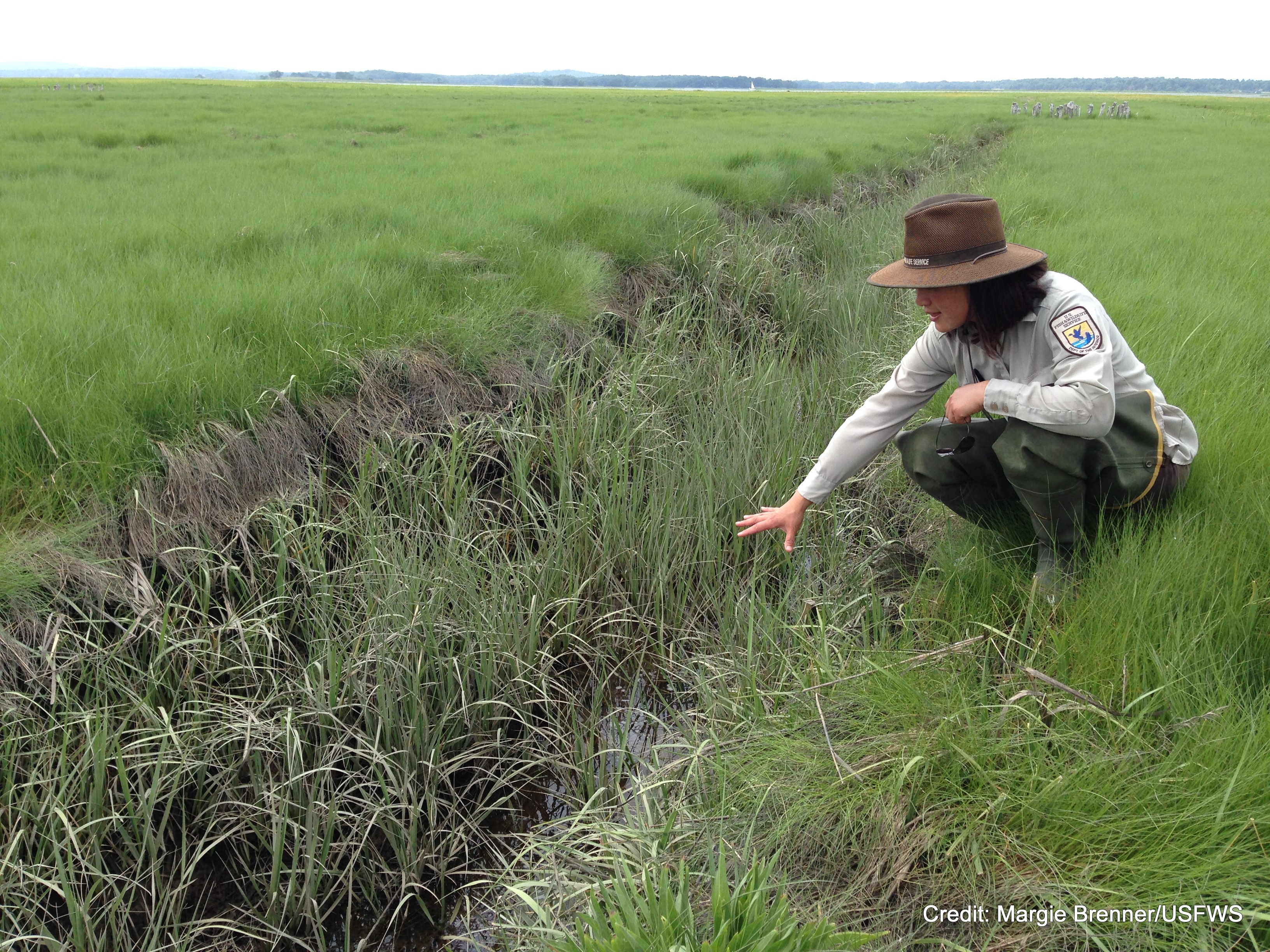 Saltmarsh Ditch Restoration