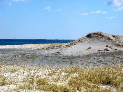 Newburyport Dune Enhancement And Restoration