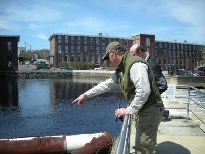 Ipswich River Herring Count