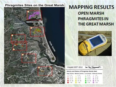 Great Marsh Revitalization & Phragmites Management