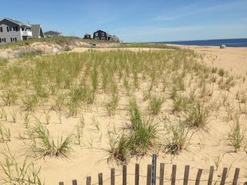 Beach Dune Restoration: Newbury, Newburyport, & Salisbury