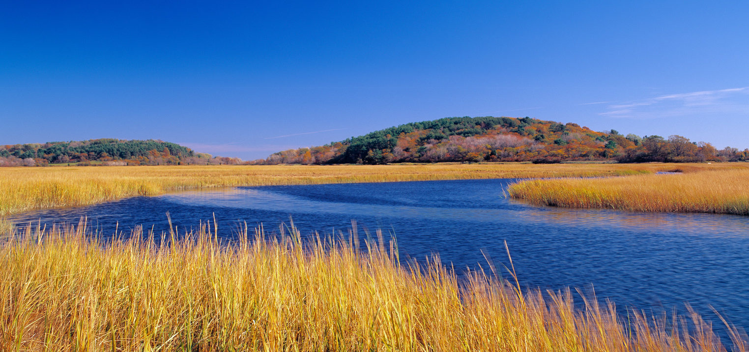 The Great Marsh. Photo: A. Borsari