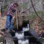 Partner Efforts Help River Herring Upstream
