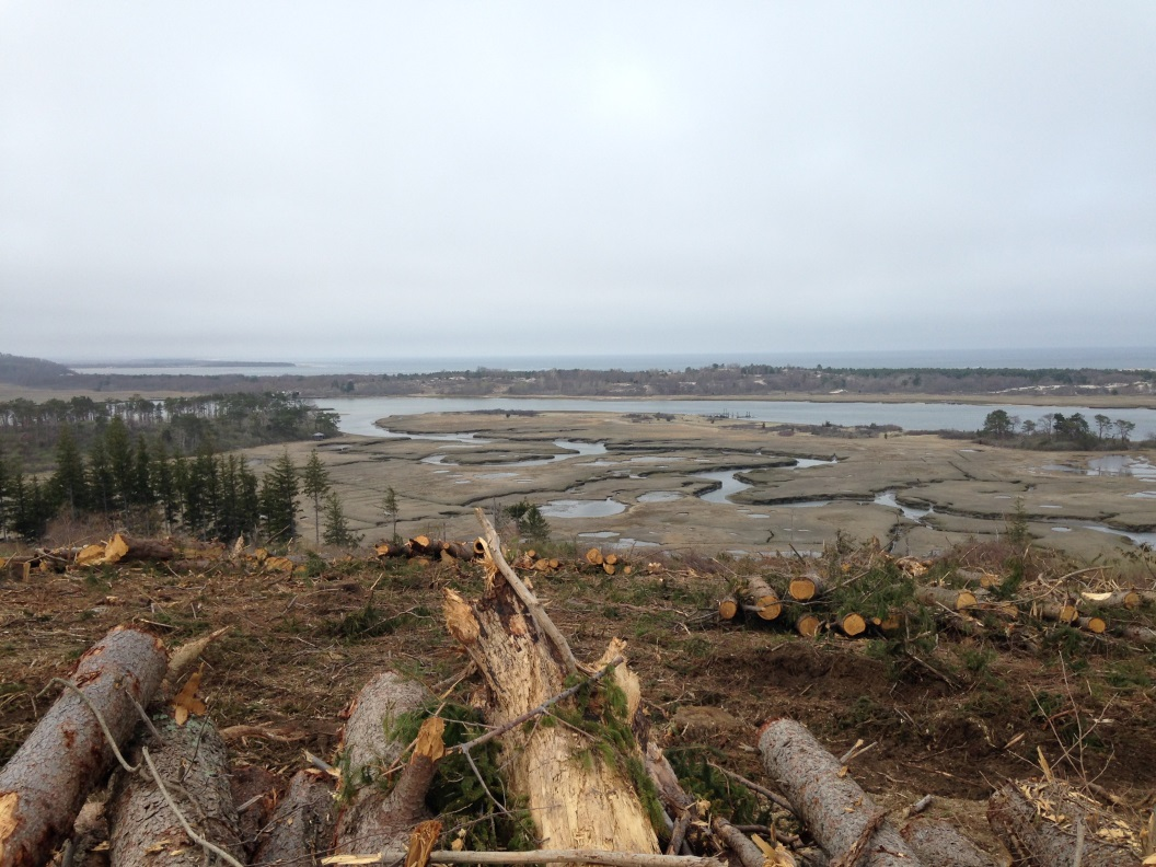 View Of Recently Cleared Area Of Choate Island, Looking North To Crane Beach.
